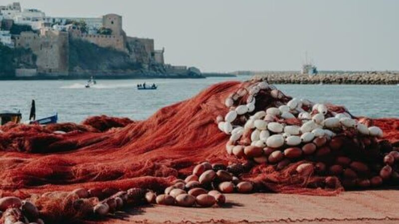 Safi, The City Of Fish And Potters Reveals Its Secrets!